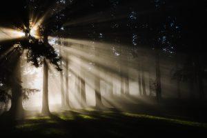 okay not to be okay - the sunlight streams through trees in a wood illuminating parts