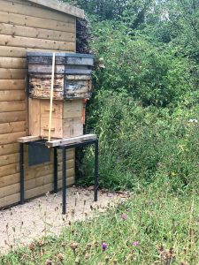 Chester Zoo - The bees in action