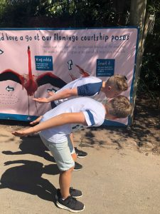 Chester Zoo - The boys copy the flamingo courting behaviours