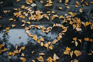 autumn leaves form the shape of a heart