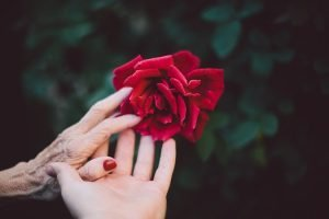 Grief for the living - a young and old hand hold a red rose